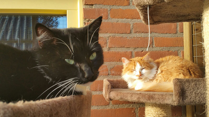 Kattenpension de Kattenburg | Klantreactie Mao