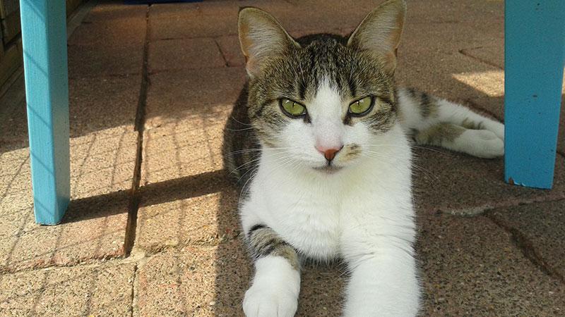Kattenpension de Kattenburg | Klantreactie Saar