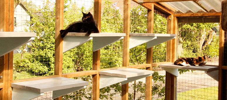 Kattenpension de Kattenburg kattenverblijven