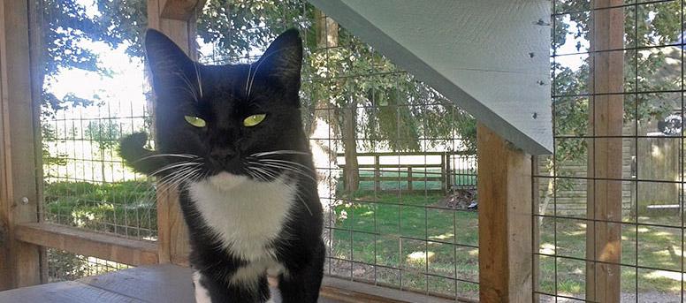 Kattenpension de Kattenburg prijslijst
