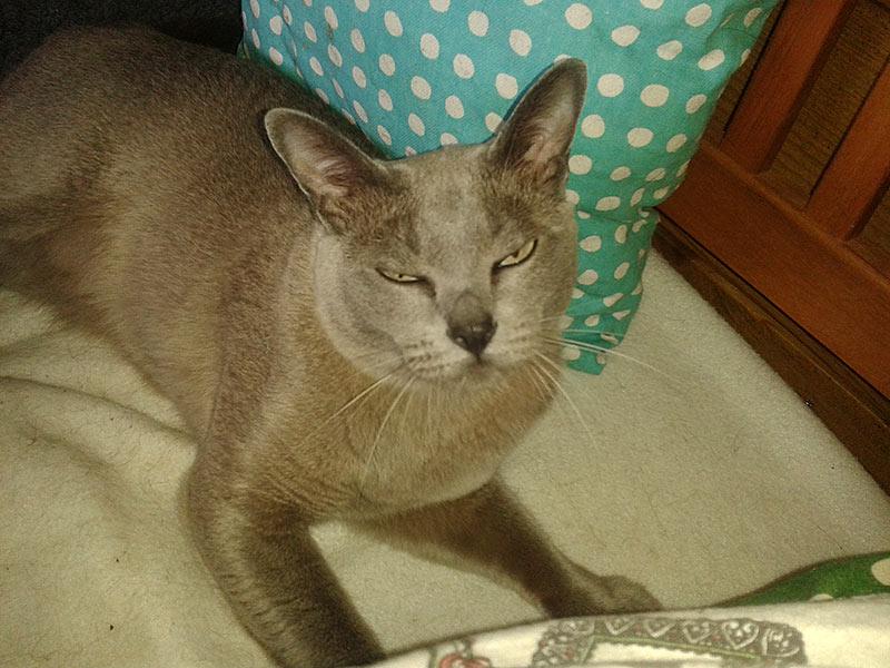 Kattenpension de Kattenburg klantverhaal veel aandacht en mooie verblijven