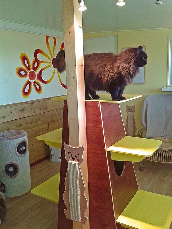 kattenpension kattenburg relaxruimte vert 4