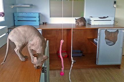 kattenpension de Kattenburg   de nieuwe kattenverblijven