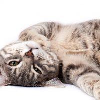 Het kattengeheugen: wist jij dat al?