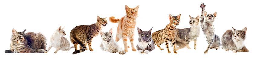 kattengeheugen blog kattenpension de Kattenburg