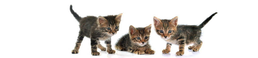 De Kittenburg voor kittens en jonge katten tot 2 jaar  | Kattenpension de Kattenburg